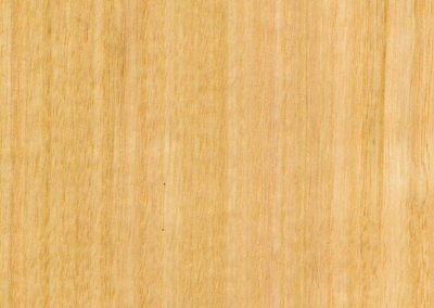 Victorian Ash timber swatch from Five Star Finishers Gold Coast